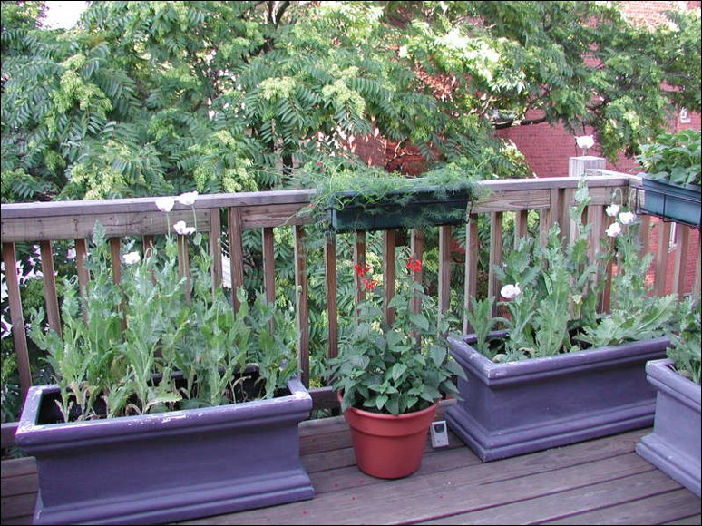 Deck Garden Ideas ground level deck designs Deck Garden Ideas