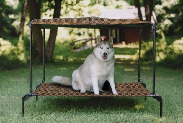Outdoor Canopy Bed outdoor canopy dog bed   deck design and ideas